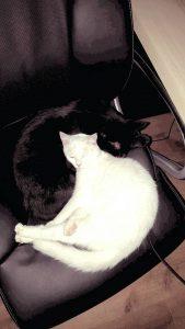 Hugo und Snickers zusammen Stuhl