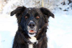 Charly im Schnee