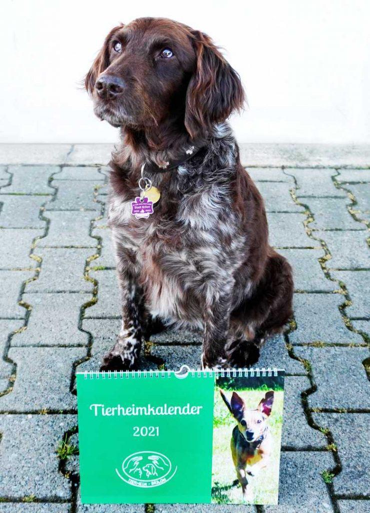 Hündin Cilly mit Tierheimkalender